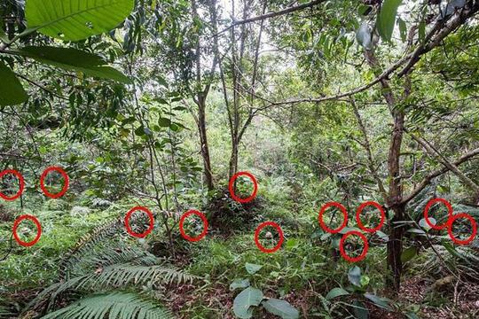 НЕМА ДА ВЕРУВАТЕ: На оваа фотографија скриени се 12 луѓе, дали гледате барем некои од нив?