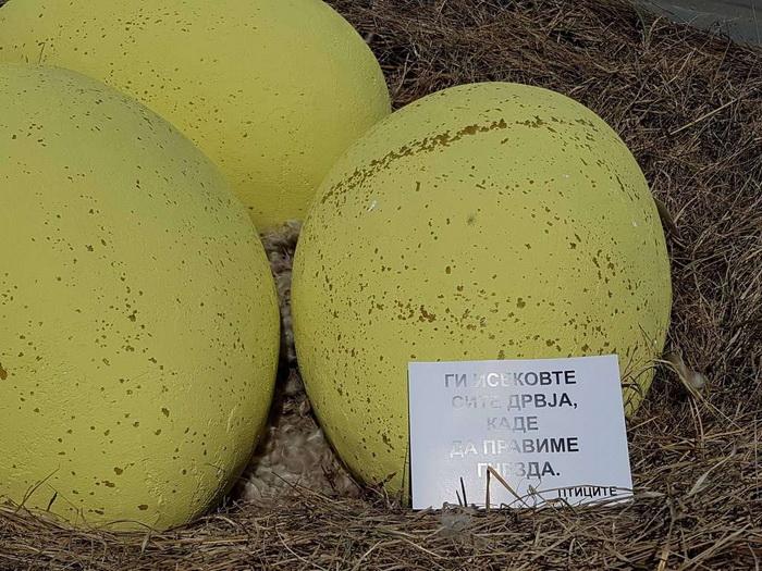 ГЕРИЛА АКЦИЈА: Огромно гнездо со јајца се појави во Скопје (ФОТО)