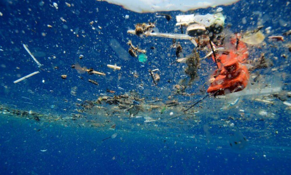 НАУЧНИЦИТЕ ВО ПАНИКА  Пронајдена пластика во телата на морските суштества на дното на океанот